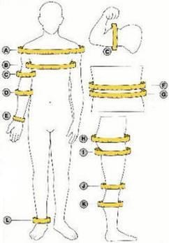 Estimaci n de la composici n corporal medidas antropom tricas for Medidas antropometricas del cuerpo humano