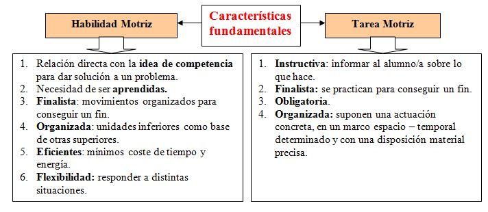 Las cualidades motrices dentro de la educaci n secundaria for Cuales son las caracteristicas de la oficina
